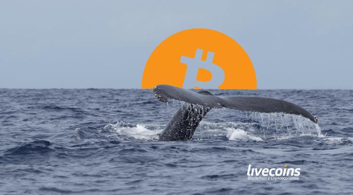 Baleia de Bitcoin são os grandes detentores da moeda digital (queda e desvalorização)