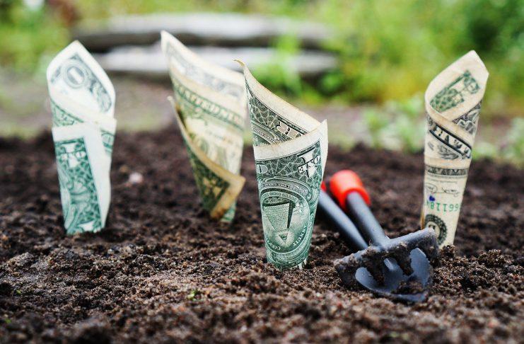 Dinheiro plantado no chão