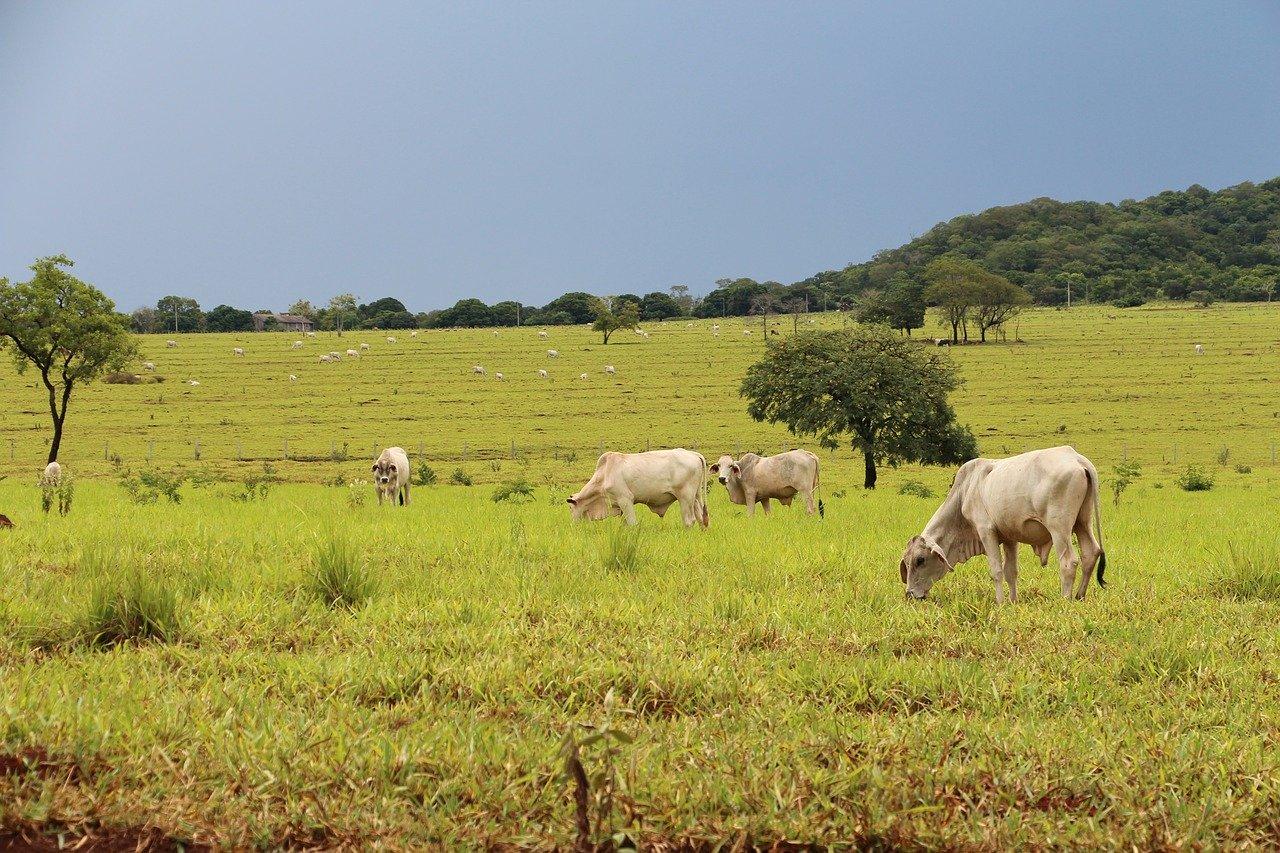 Campo é onde está uma das principais atividades que impulsionam o PIB no Brasil