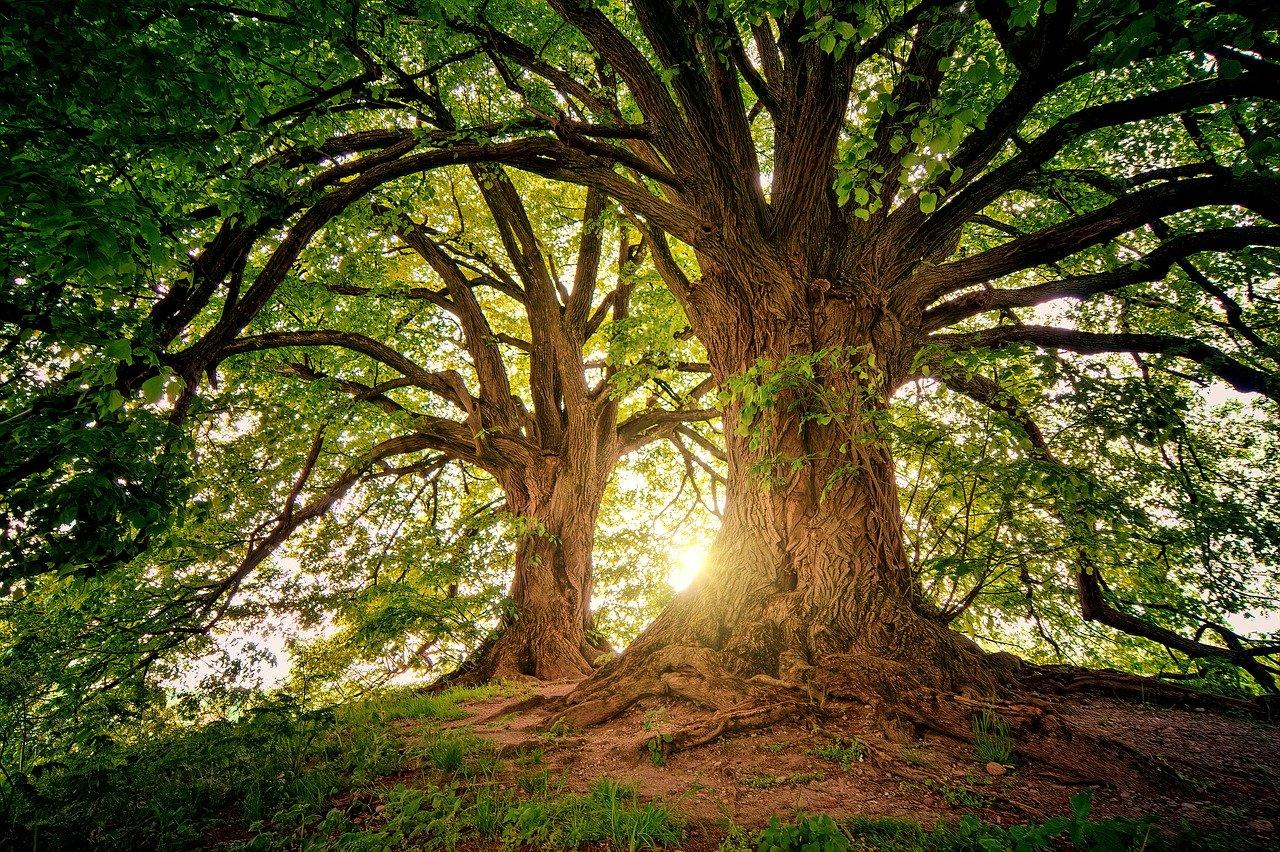 Criptomoedas árvores