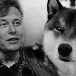 Elon Musk e Shiba Inu, cachorro símbolo da Dogecoin