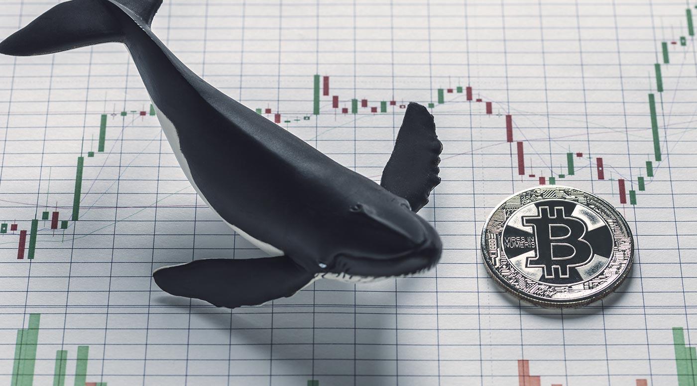Baleia Bitcoin. (Imagem: Adobe Stock)