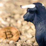 Touro observando o Bitcoin bull trap